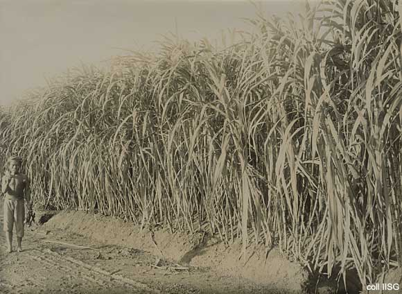 IISH | Publications | Plantation in Dutch East Indies